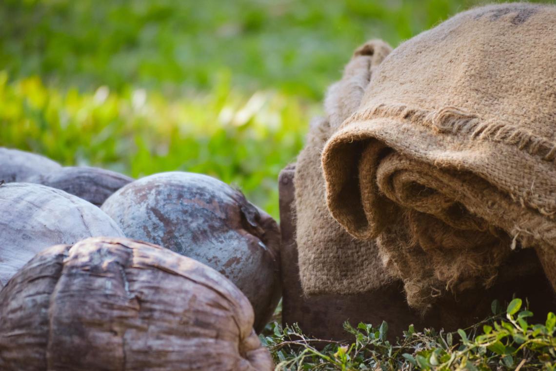 Préparation du coprah, un sport traditionnel polynésien