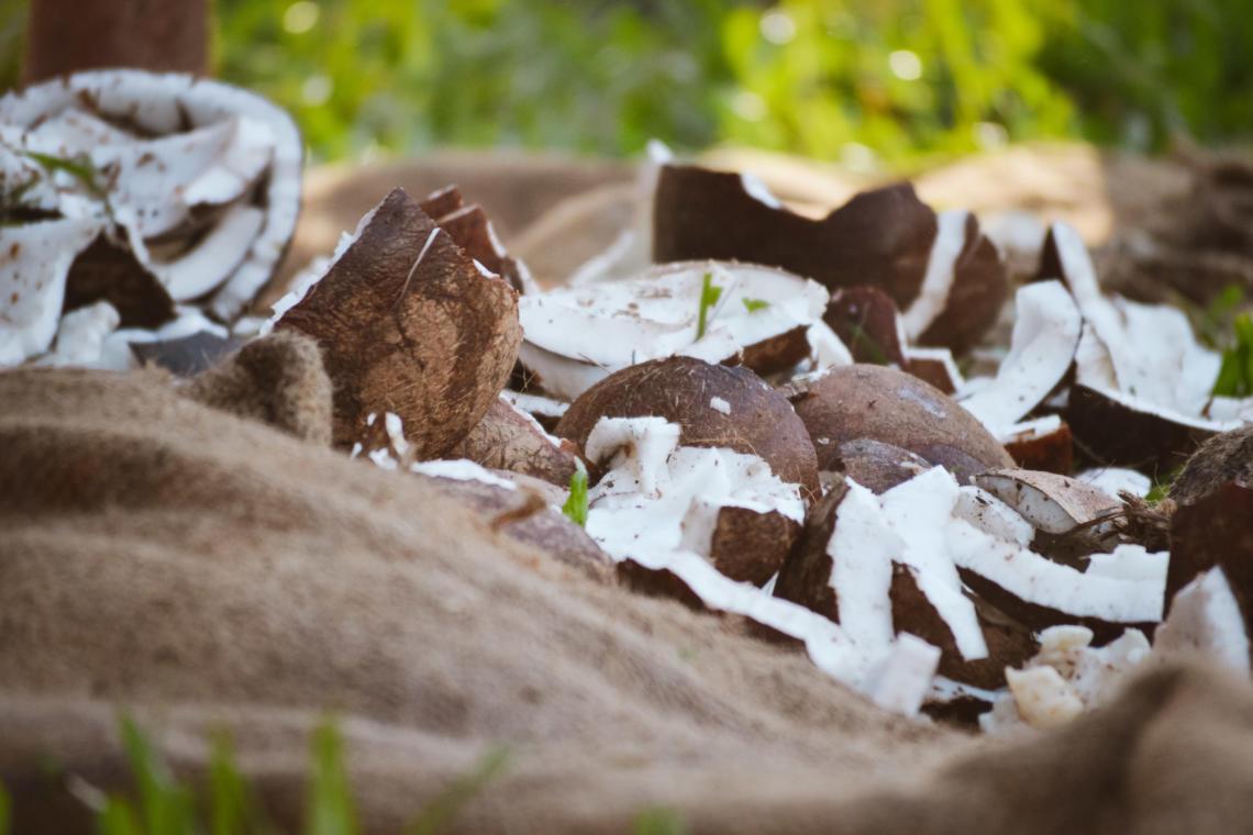 La chair de coco pour le coprah, un sport traditionnel polynésien