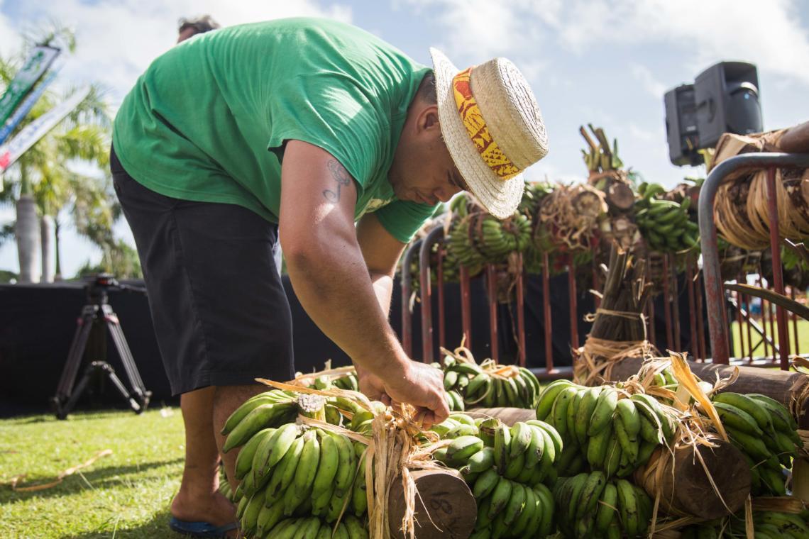 Confection des charges pour les courses de porteurs de fruits, un sport traditionnel polynésien
