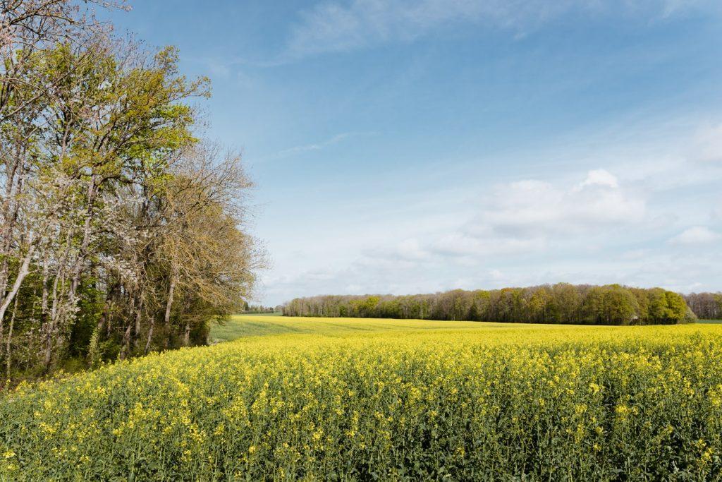 Champs dans la Haute Vallée de Chevreuse, dans les Yvelines - Idée de week-end nature en Île-de-France