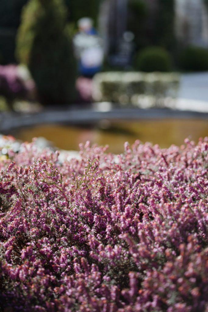 Dans les jardins de l'Abbaye des Vaux de Cernay en Haute Vallée de Chevreuse dans les Yvelines - Idée de week-end nature et patrimoine en Île-de-France